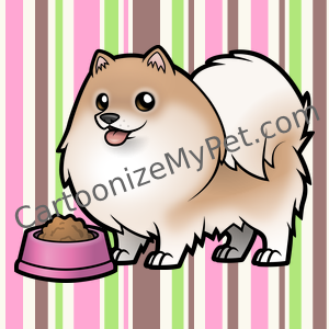 Cute Fawn Pomeranian on a stripey background