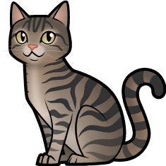 Domestic Shorthair